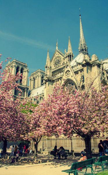 Springtime in Paris // Notre Dame Cathedral