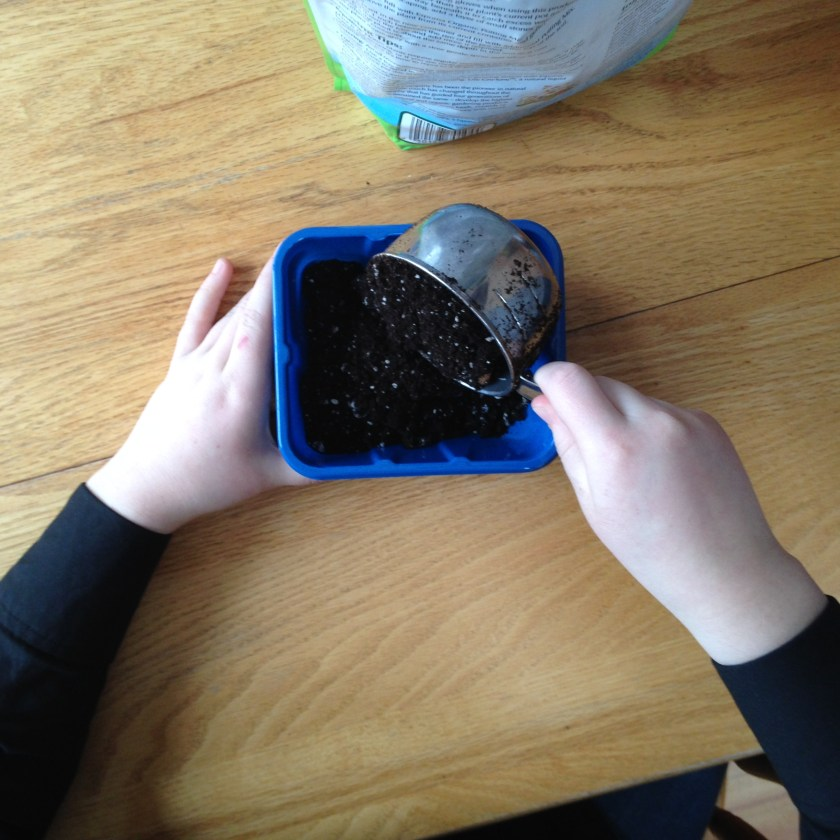 Add soil to container.