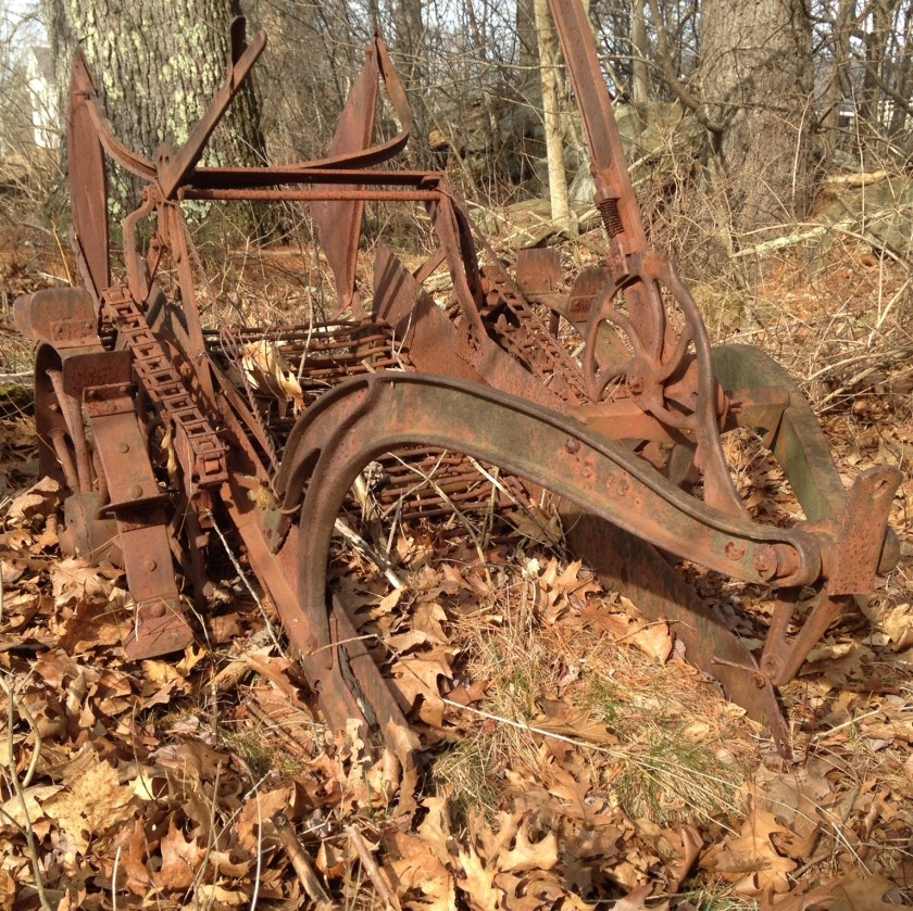 An old potato harvester.