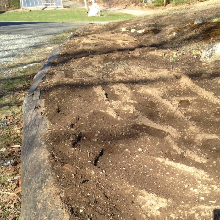 This is my freshly tilled carrot bed.