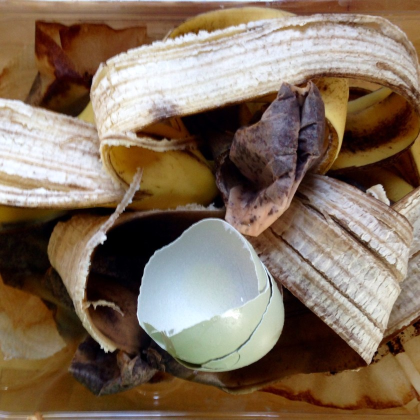 Veggie scraps, fruit peels and eggs shells for the worm bin.