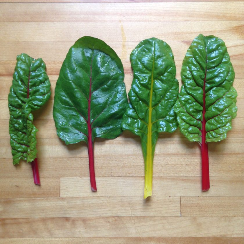 Baby chard leaves are a great addition to salads!