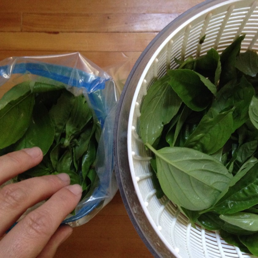 Wash and spin the basil leaves.