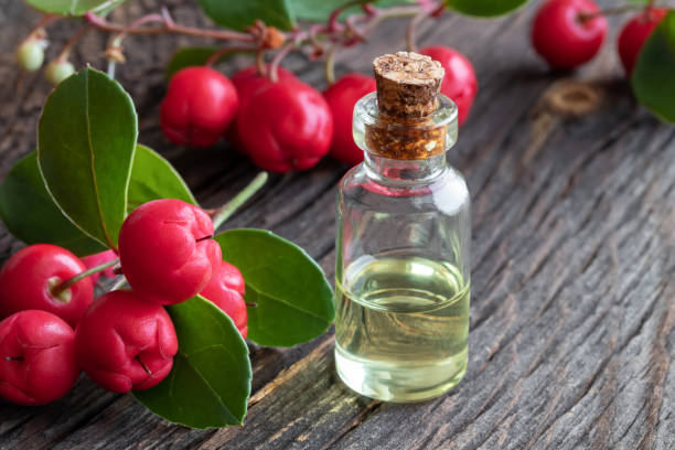 Wintergreen Essential Oil Uses, Benefits and Warnings - EverPhi