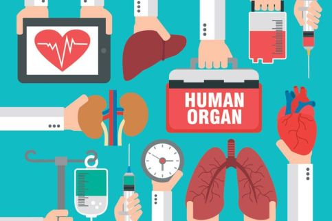 Image result for organ donation