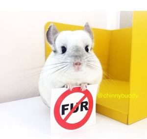 Mr. Bagel Says No to Fur - Every Animal Project