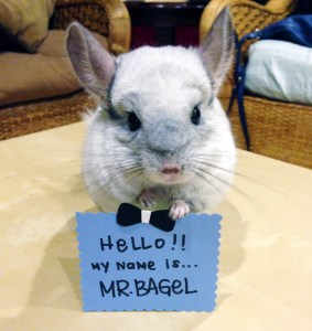 Mr. Bagel - The Every Animal Project