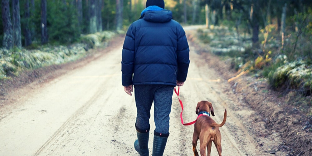 Wilderness Survival Tips With Your Dog