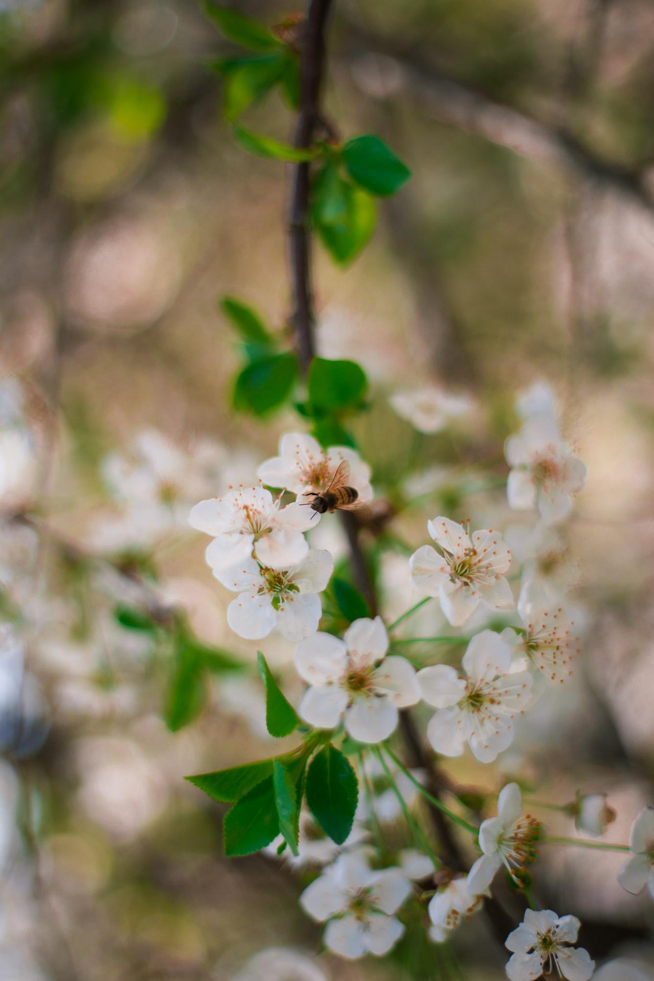 fotografia con ape
