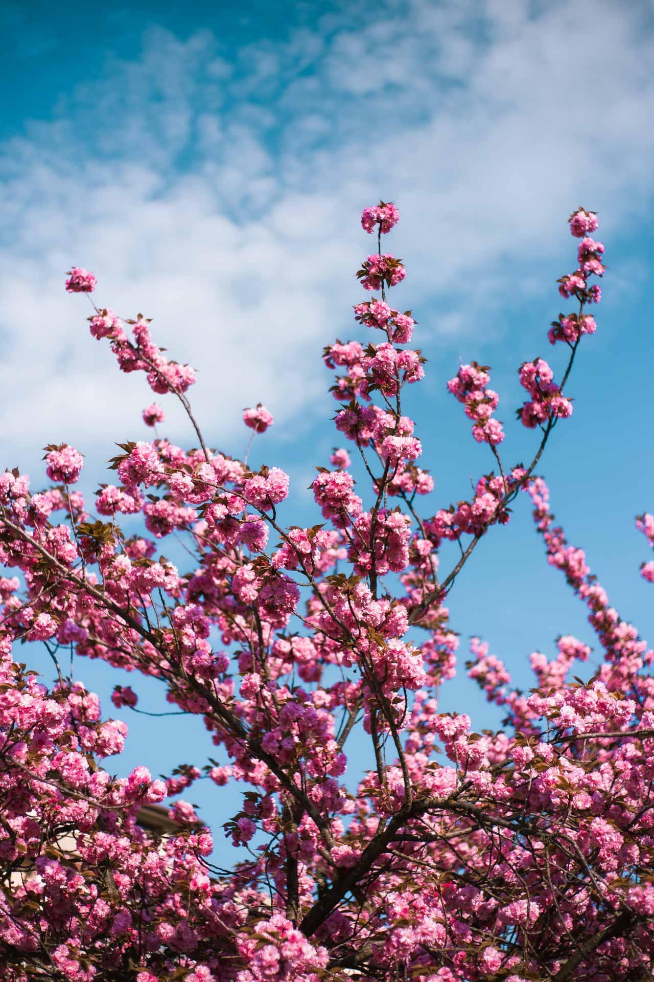 immagini di primavera bellissime