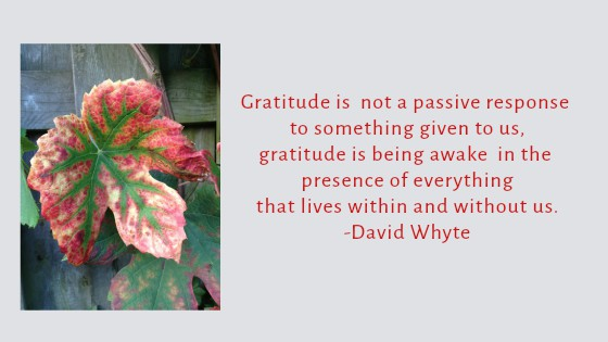 Gratitude Is Being Awake