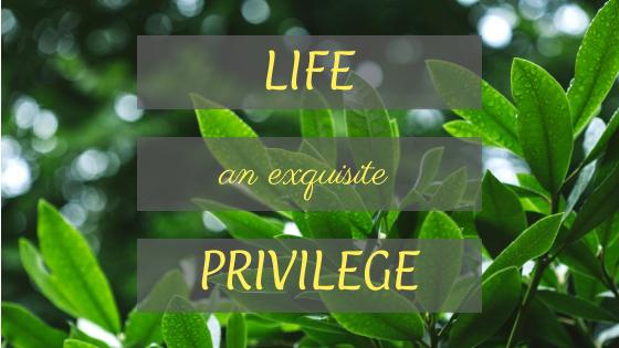an exquisite privilege
