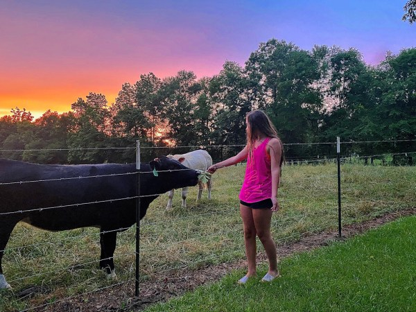Dakota feeding cows