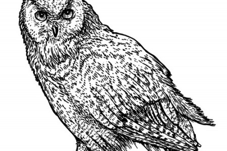 4k Pictures Native American Owl Symbol