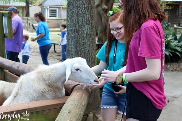 With daily meet a keeper animal talks, train rides, the coolest elevated board walk looking out over 30 acres of wildlife, and the farm; where you can feed and pet a variety of farm animals, I'm sharing our reasons on Why You Should Visit The Gulf Breeze Zoo in Gulf Breeze Florida!| EverydayMadeFresh.com