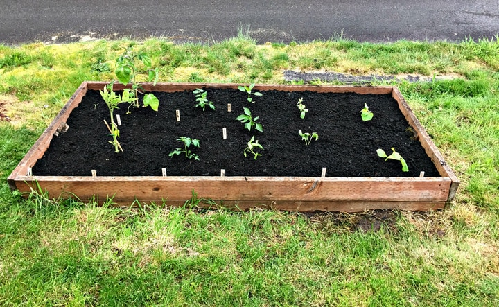 Planting an Organic PNW Vegetable Garden from www.EverydayMaven.com