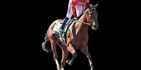 Caledonia Road horse
