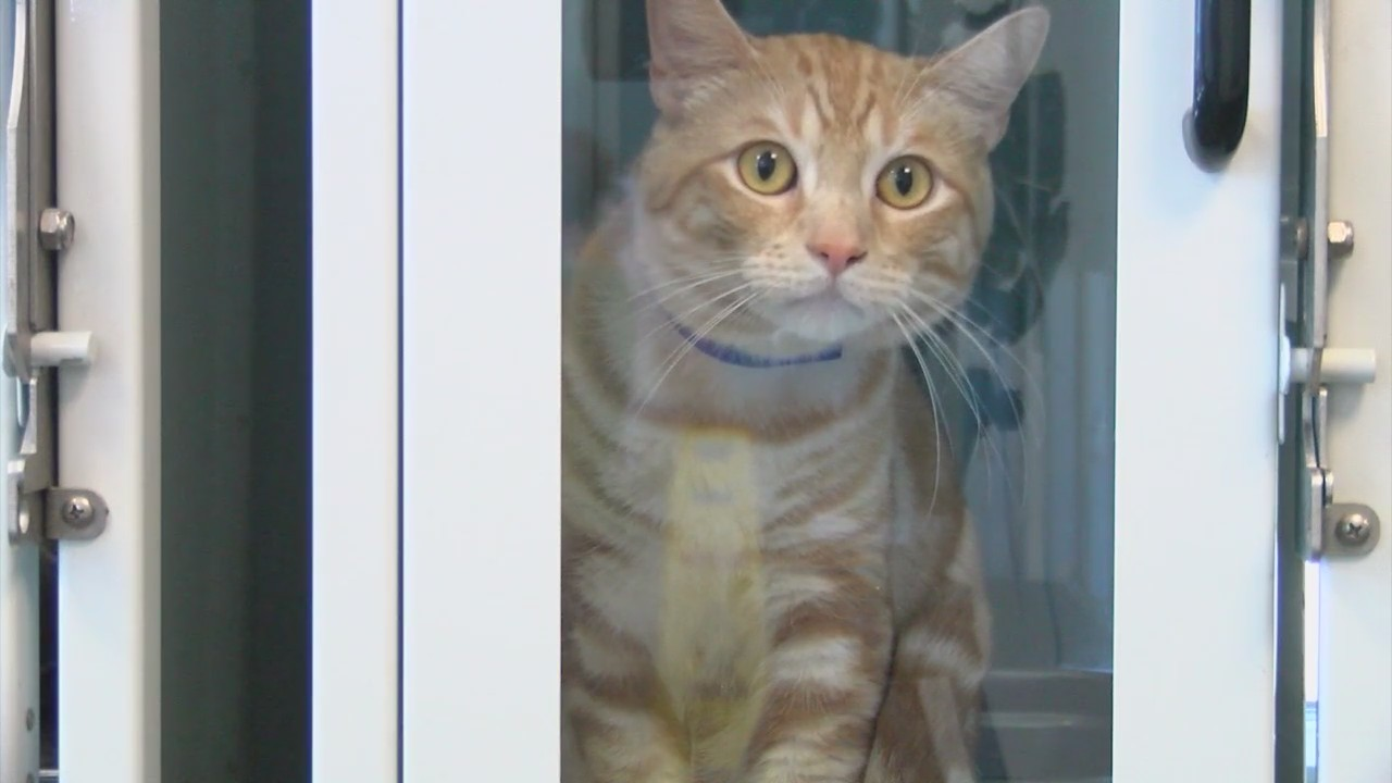 "Lubbock Animal Shelter quarantines cats after ""Feline Distemper"" outbreak"