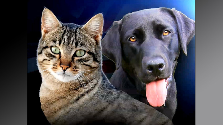 Pet Adoptions, Cats and Dogs - 720