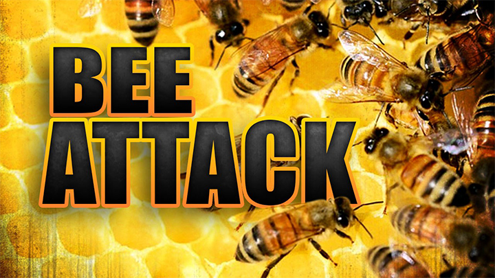 Bee Attack Graphic - 720