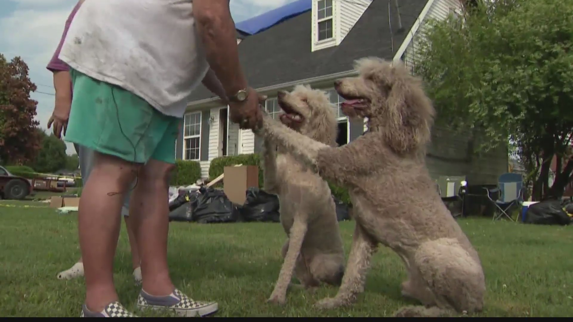 Poodle_in_Tennessee_saves_family_0_20190606214955-60044165