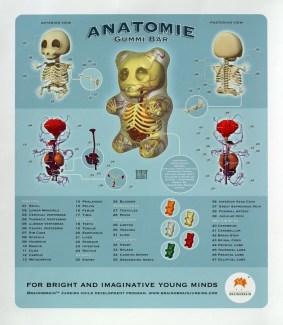 Gummy Bear Anatomy