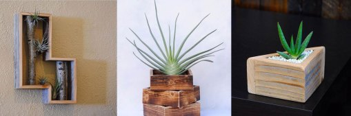 Plant Ideas by Lukerativehussla