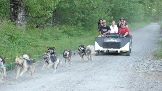disney-cruise-dog-sled-summer-camp