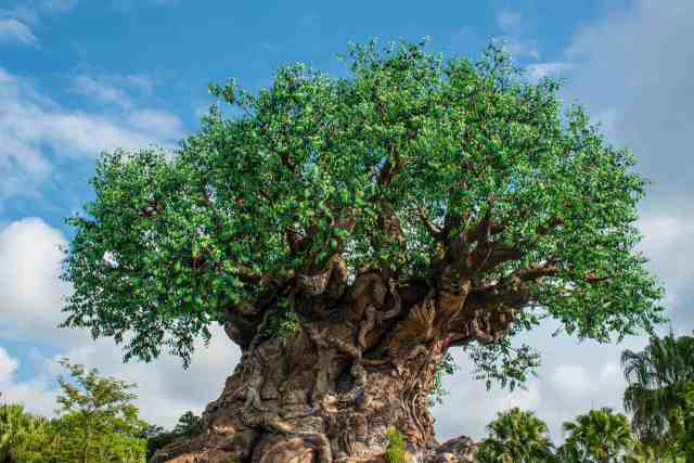 disney animal kingdom quiz