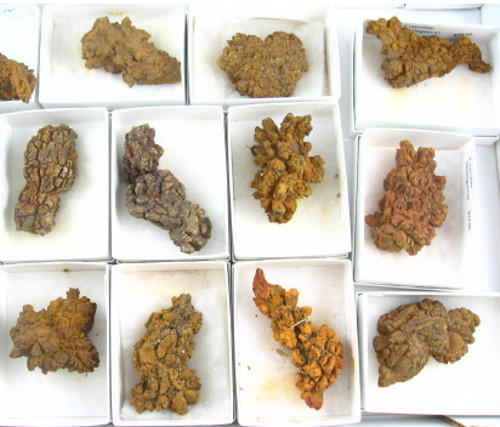 Figure 2 — Mary Anning knew what these were: fossil faeces! © electrobleme.