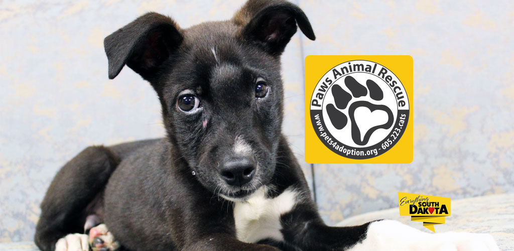 Paws Animal Rescue, Adopt or Donate Today!