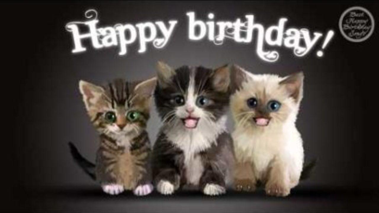 Cat Memes Happy Birthday Cat Memes Funny Cat Memes Pictures