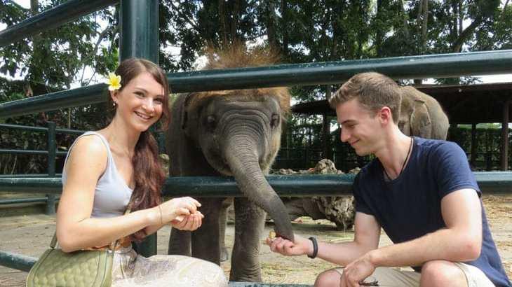 Bali Elephant Safari Park Gets New Baby Elephant