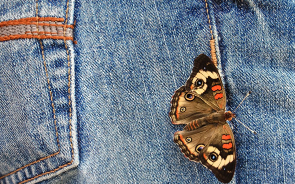 butterfly-and-jeans