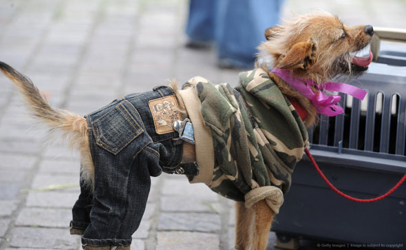 dog-and-jeans-4