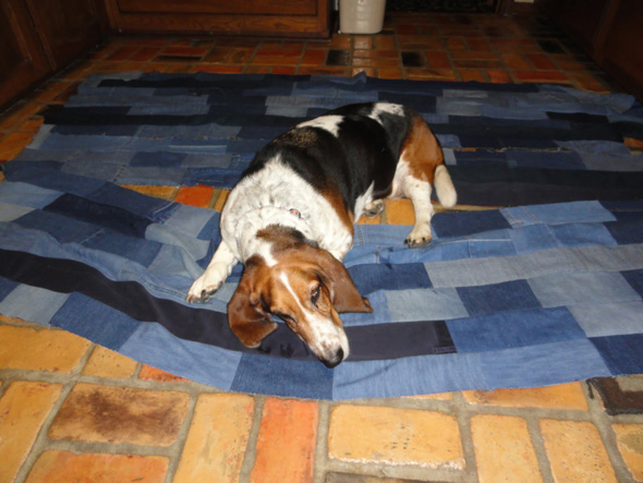 dog-and-jeans-6