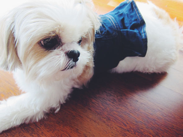 dog-and-jeans-9