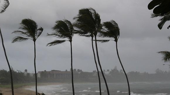 Hurricane Palms