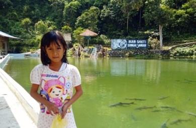Lokasi Wisata Ikan Sakti Sungai Janiah