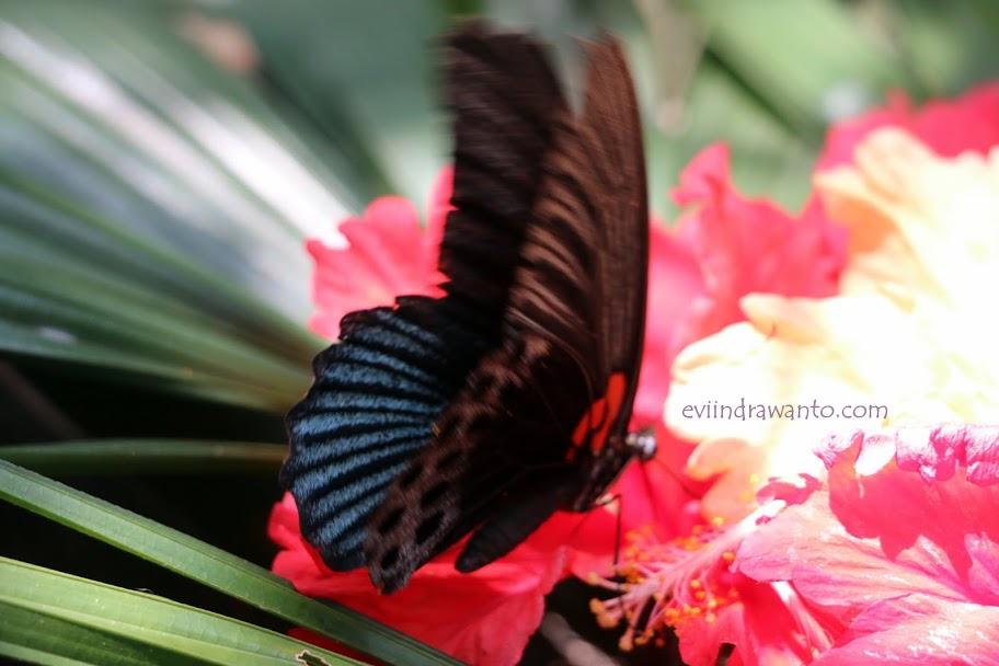 Kupu-kupu dan bunga karya Herawati Soekardi Djausal
