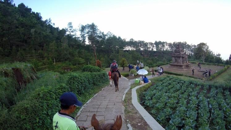 Wisata Kompleks Candi Gedong Songo: Diantara kebun bunga dan kebun sayur