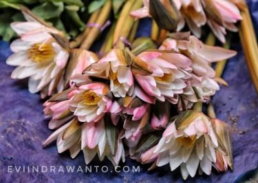 Bunga teratai? Ini sayur Kembang Tanding