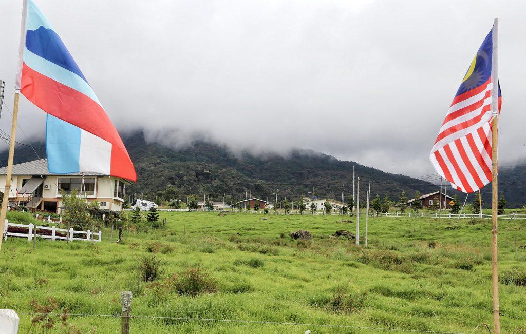 Keadaan di Desa Cattle Dairy Farm