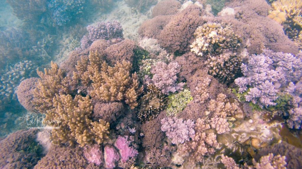 Taman bawah laut Ujung Kulon