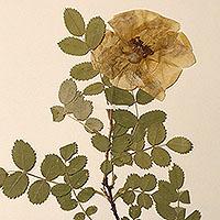herbariumlink