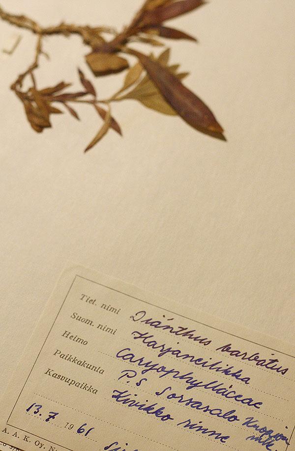herbarium2