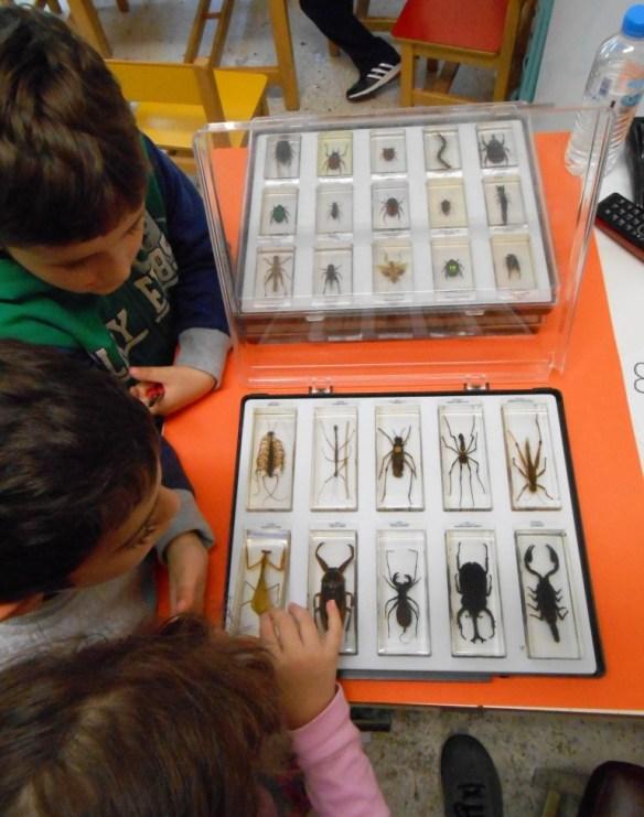Entomologoi
