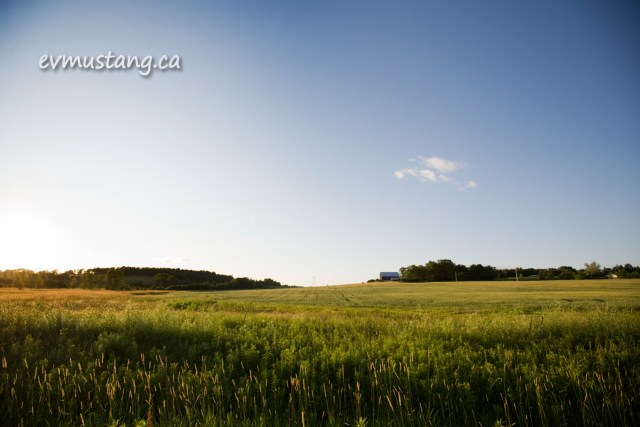 image of farm and green field in summer