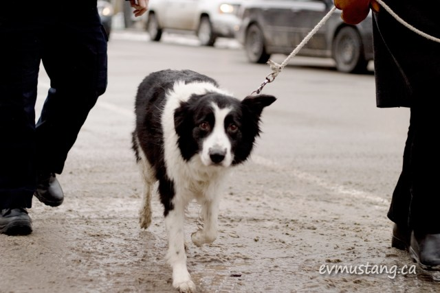image of dog on city street