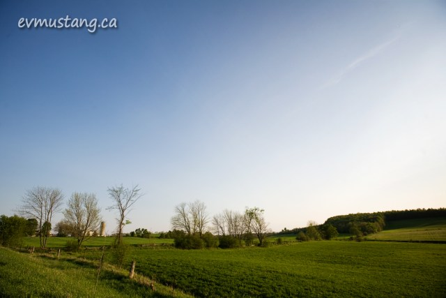 image of a green field in spring with a stand of trees
